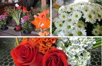 Floricultura Flores e Detalhes
